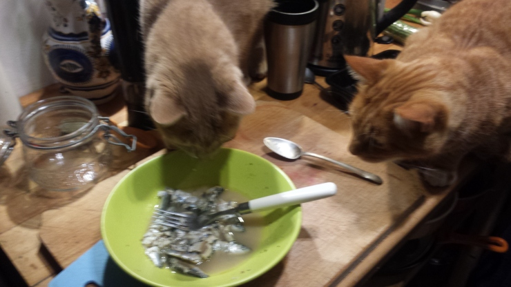 Two cats trying to steal fish
